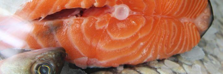 latvianfish