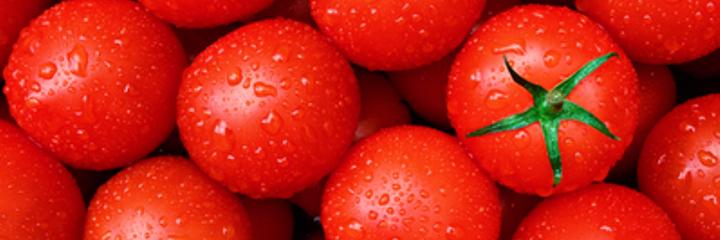 tomatoeidh